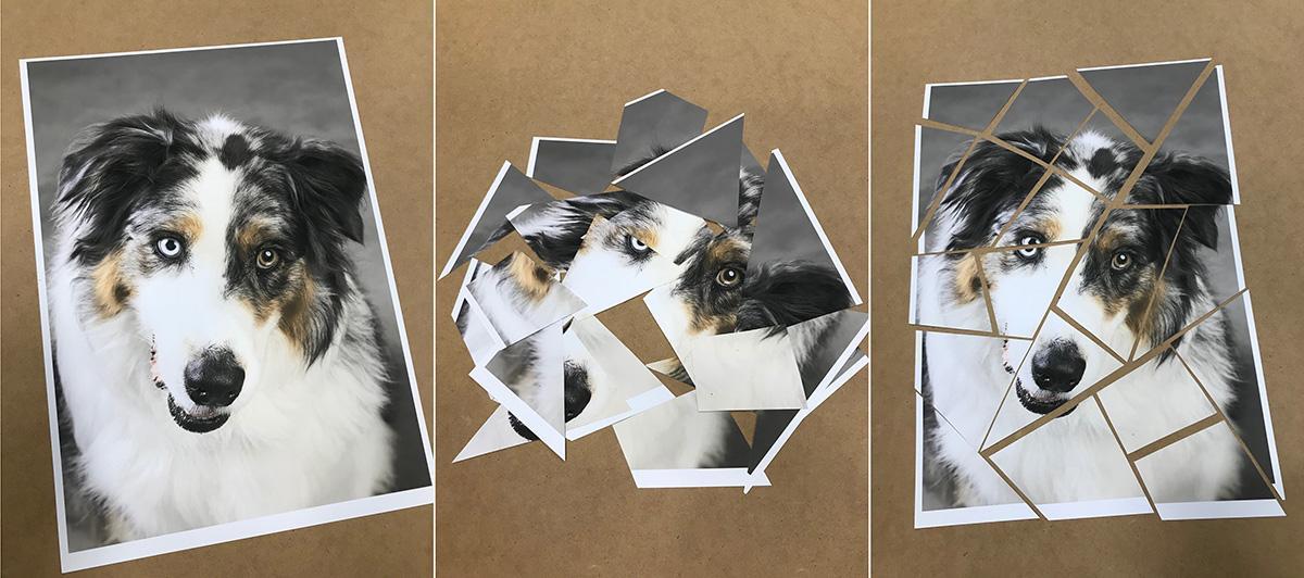 Dog-puzzle-photo